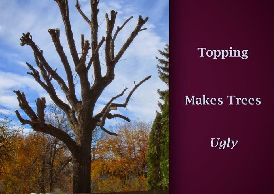 The Dangers of Topping Your Trees