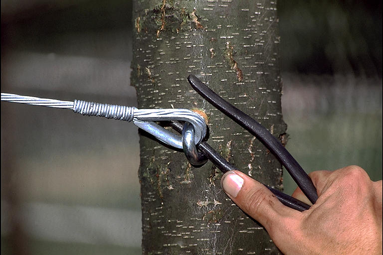 Prepare Your Trees For Harsh Weather With Cabling