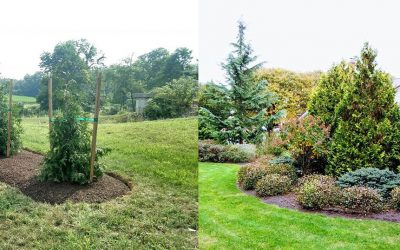 Landscaping on the Edge: Green Walls, Privacy Screens and Natural Alternatives to Fences