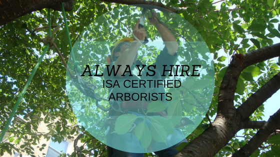 Hire an ISA Certified Arborist- you won't be sorry!
