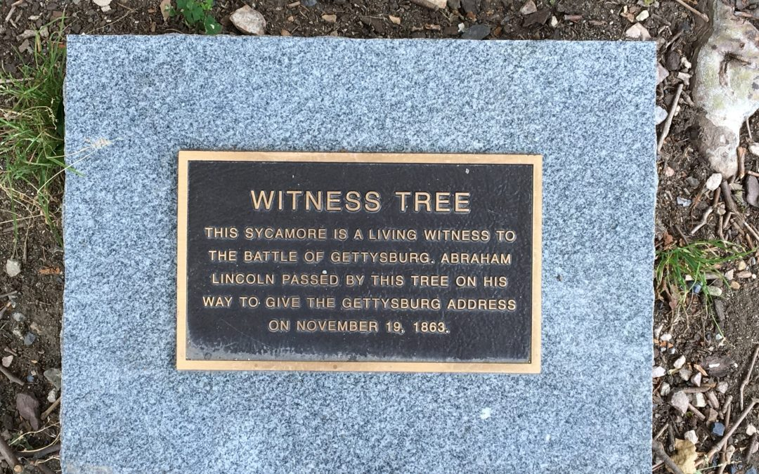 """Witness Tree"" Protection Program: Preserving Gettysburg's Living History"