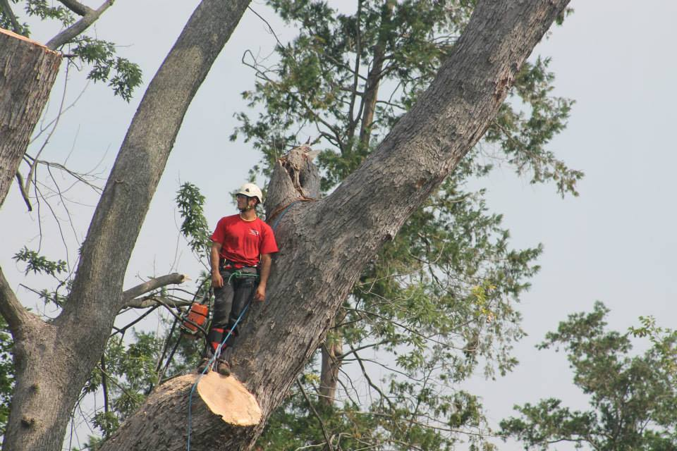 So You Want to be an Arborist with Cumberland Valley Tree Service – Landscaping