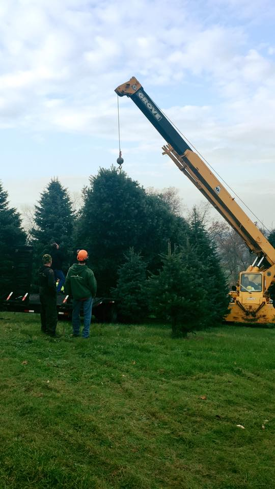 Cumberland Valley Tree Service - Landscaping's Christmas