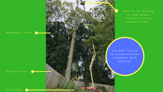 Tree Care and Property Lines Part 3: Being a Good Neighbor