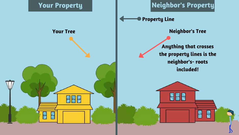 Tree Care and Property Lines Part 2: Ground-to-Sky