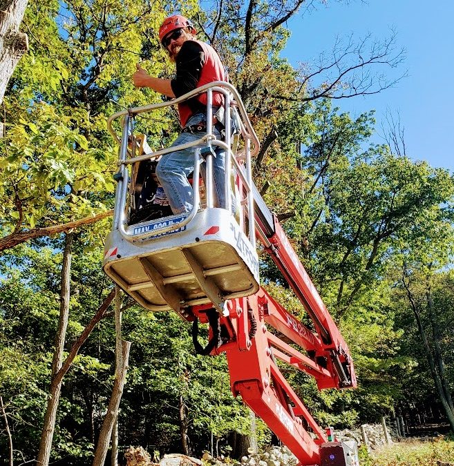 The Spider Lift Versus the Emerald Ash Borer